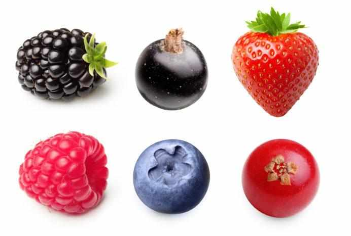 Types of succulent berries