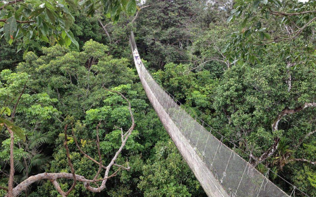 Walk to explore the Amazon jungle - Peru