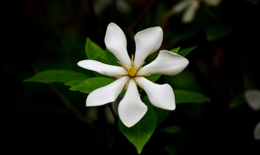Tahitian Beauty Secrets: Discover Monoi Oil