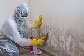 Mold Remediation Services in Miami FL